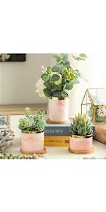 Pink succulent pots with saucer