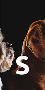 dog size