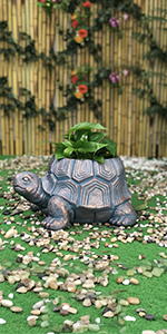 turtle head planter