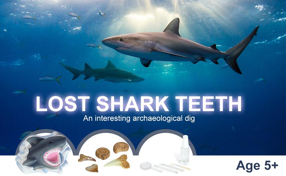 shark tooth excavation kit Banner