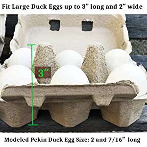 Duck Egg Cartons Jumbo Size