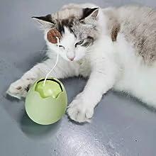 Cat Interactive scene