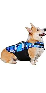 dog life west for swim