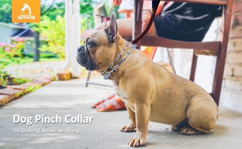 Dog pinch collar