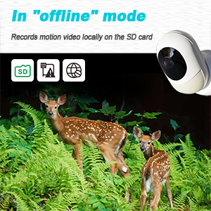 wireless camera offline