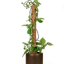garden trellis for climbing outdoor plants