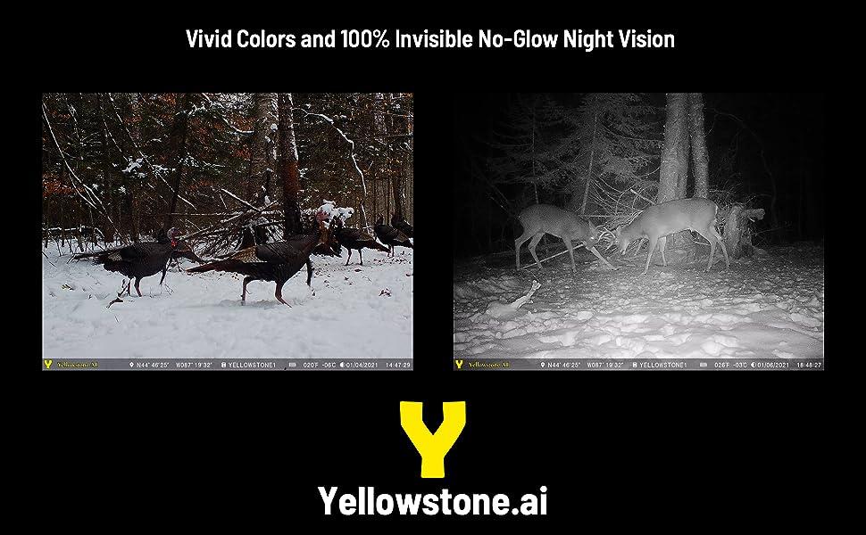 no glow invisible flash night vision deer camera color