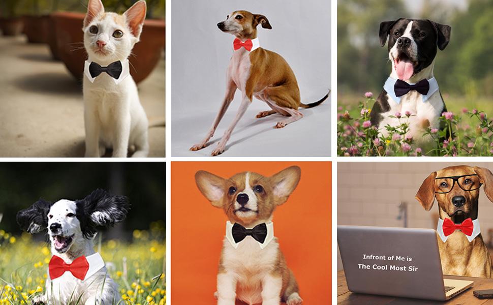 Koolmox Dog Bow ties for Wedding