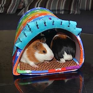guinea pig tube