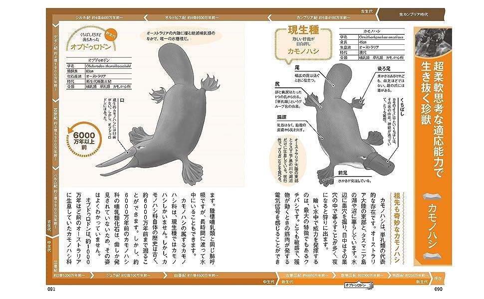 生きている化石図鑑970600