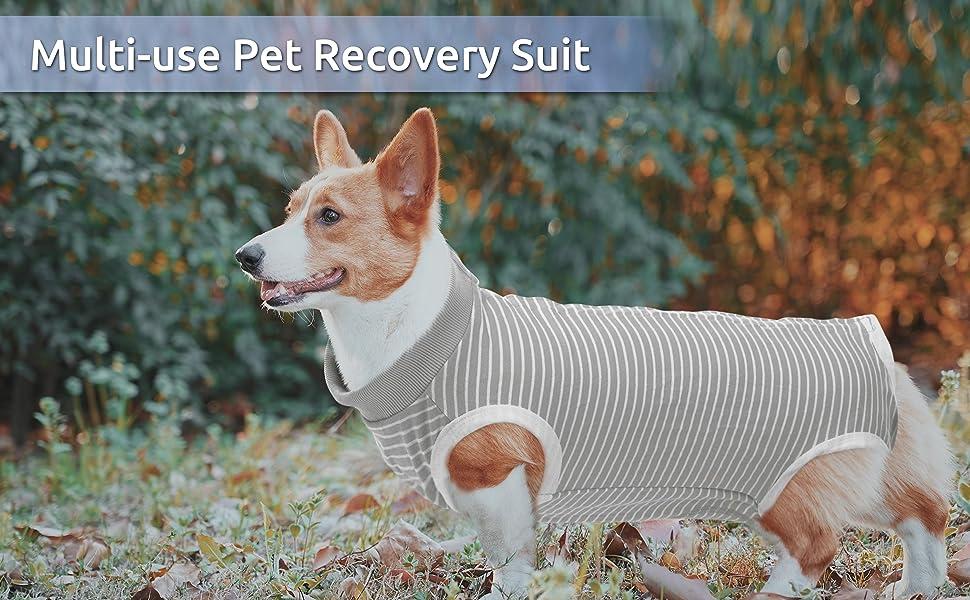 Multi-use pet recoery suit