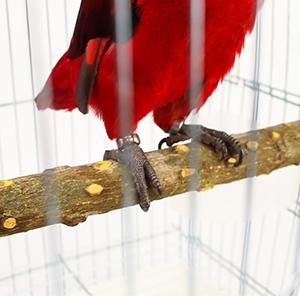 For your birds to stay in a healthy and hygienic environment