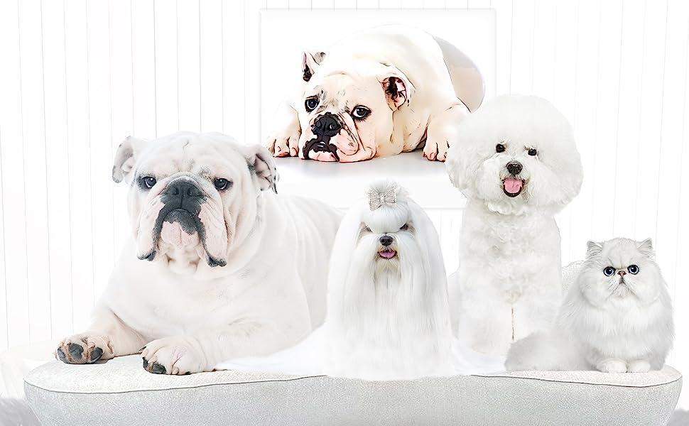 Razzle Dazzle White Pet  shampoo, Razzle Dazzle White Pet whitens coats, dog whitening shampoo