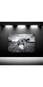 White Photo Canvases, Photo Canvas Prints, canvas print,, cow bathroom decor