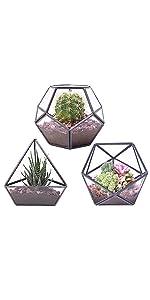 set of 3 mini terrarium