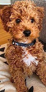 Dog collar, dog harness, dog leash, pet harness, puppy collar, reflective dog collar