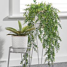 Chrome metal plant stands, white pot, green plants in front of white wall, window
