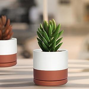 Stylish Designed Succulent Pots