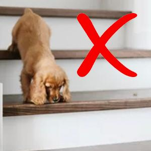 stairs pet size hip joint injuries dog ramp adjustable