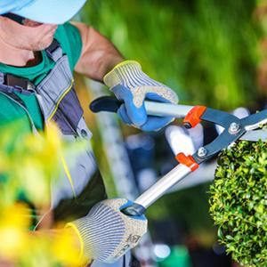 gardening, cleaning, landscaping,car repair,repairing, lifting, digging