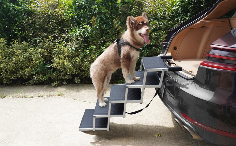 dog car ramp