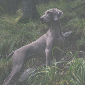 dog.in.forest