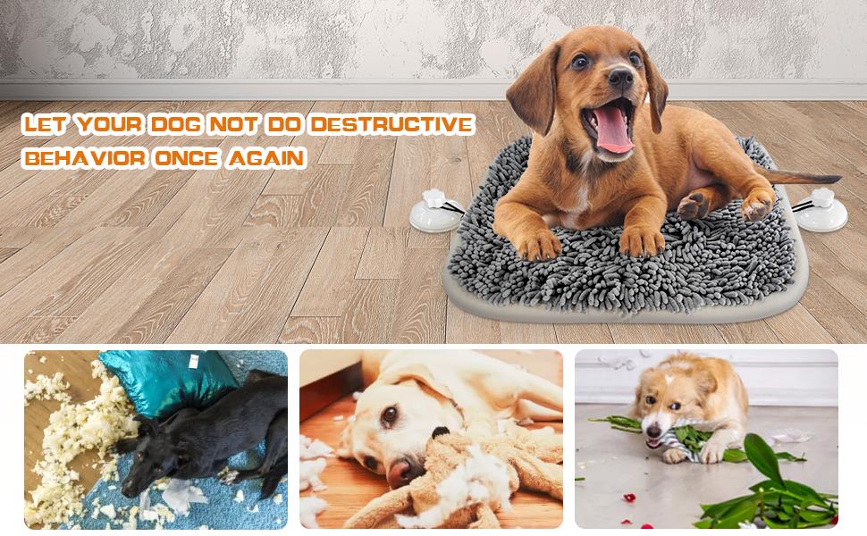 Let your dog not do destructive behavior once again