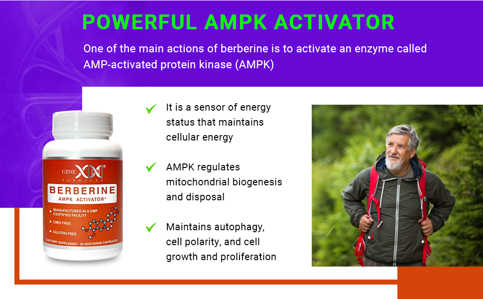 One of the main actions of berberine is to activate an enzyme called AMP-activated protein kinase