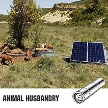 animal using