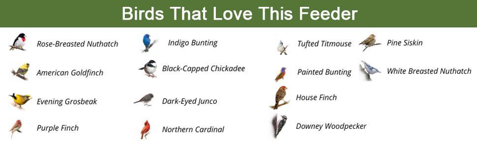 Bird that love this feeder