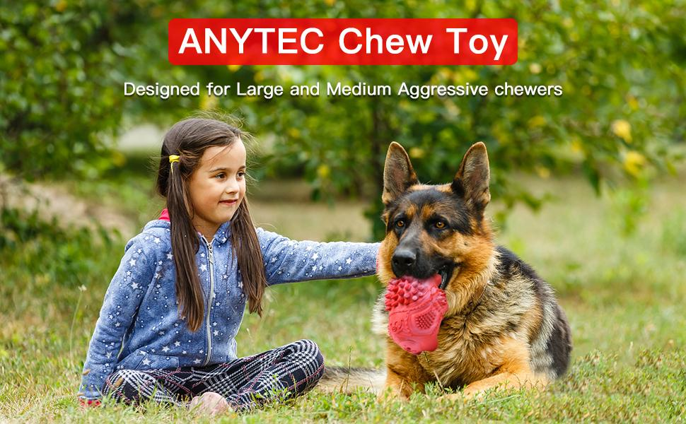 Best Gift for Your dog