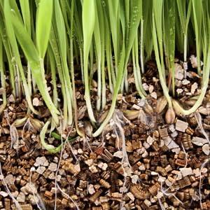 Growing Vermiculite