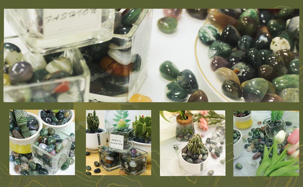 plants rocks