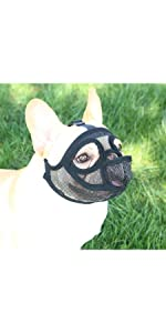 short snout dog muzzle