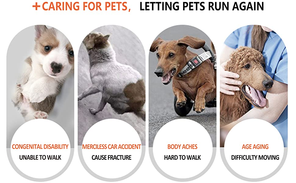 Caring for pets, letting pets run again