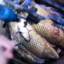 Bowfishing Life