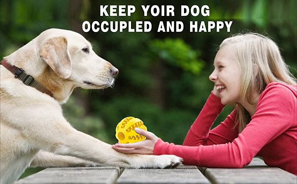 Keep you dog occupled and happy