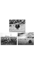 Black and White Texas Countryside Landscape Pictures