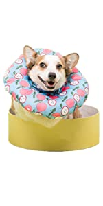 dog recovery cone
