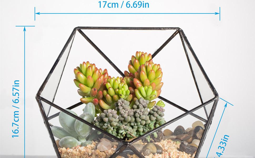Succulent Plant Cacti Fern Flower Pot