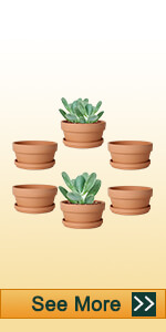 3.7 inch shallow clay pot
