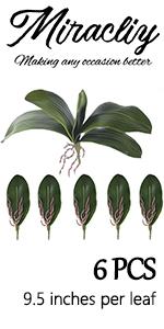Miracliy Phalaenopsis Orchids Leaves