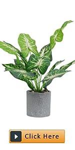 greenery plants