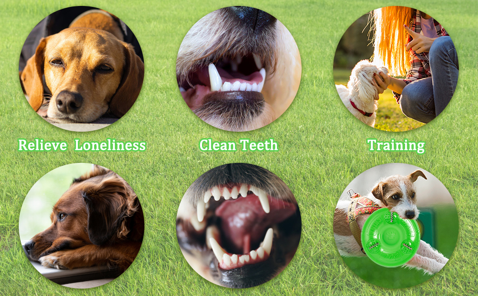 The BEST Choice For Your Dog