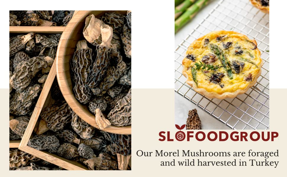 slofoodgroup morel mushrooms are foraged and wild harvested in turkey