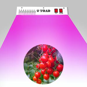 plant lights for indoor plants