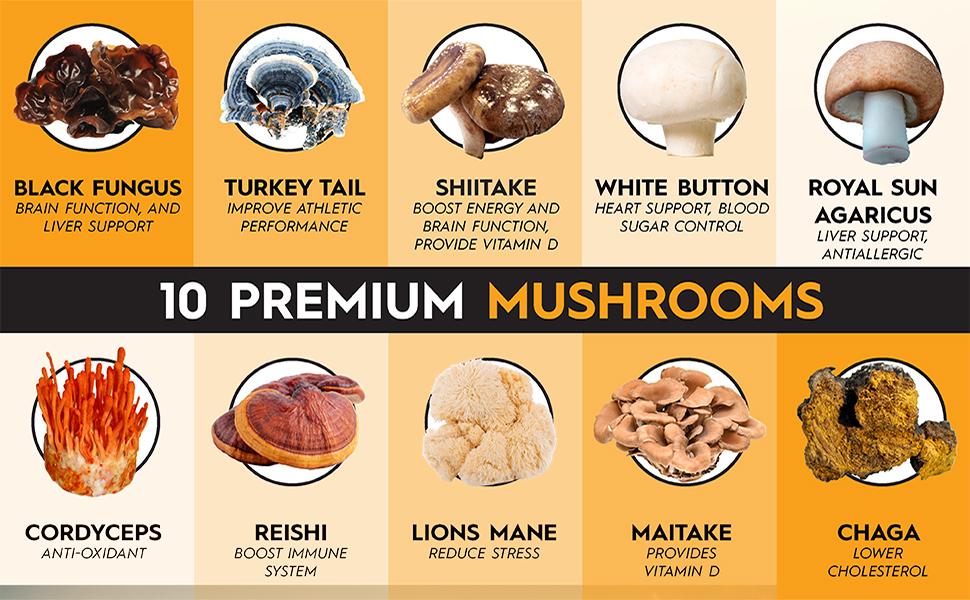 mushroom complex immune support mushroom supplements for immunity maitake mushroom capsules