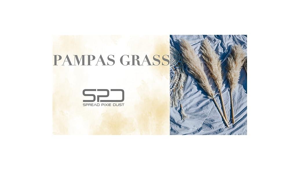 pampas grass cortaderia dried pampas grass tall dried pampas grass living room pampas grass pampas