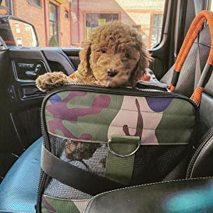 Doodle Puppy in Large Roverlund Pet Carrier
