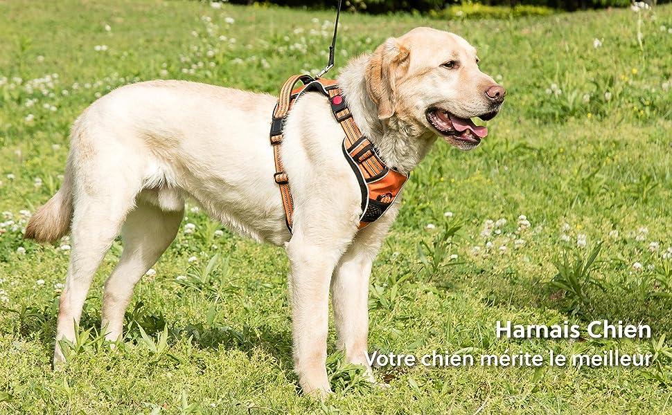 harnais chien orange